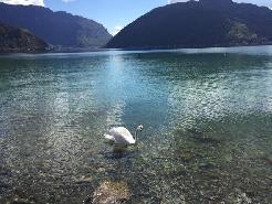 Melide : in vacanza ! Grande 3.5 con vista lago e posteggio